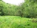 Land in Town for Sale in Telega (Prahova, Romania), 10.500 €