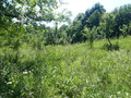 Land in Town for Sale in Poiana Campina (Prahova, Romania), 15.000 €